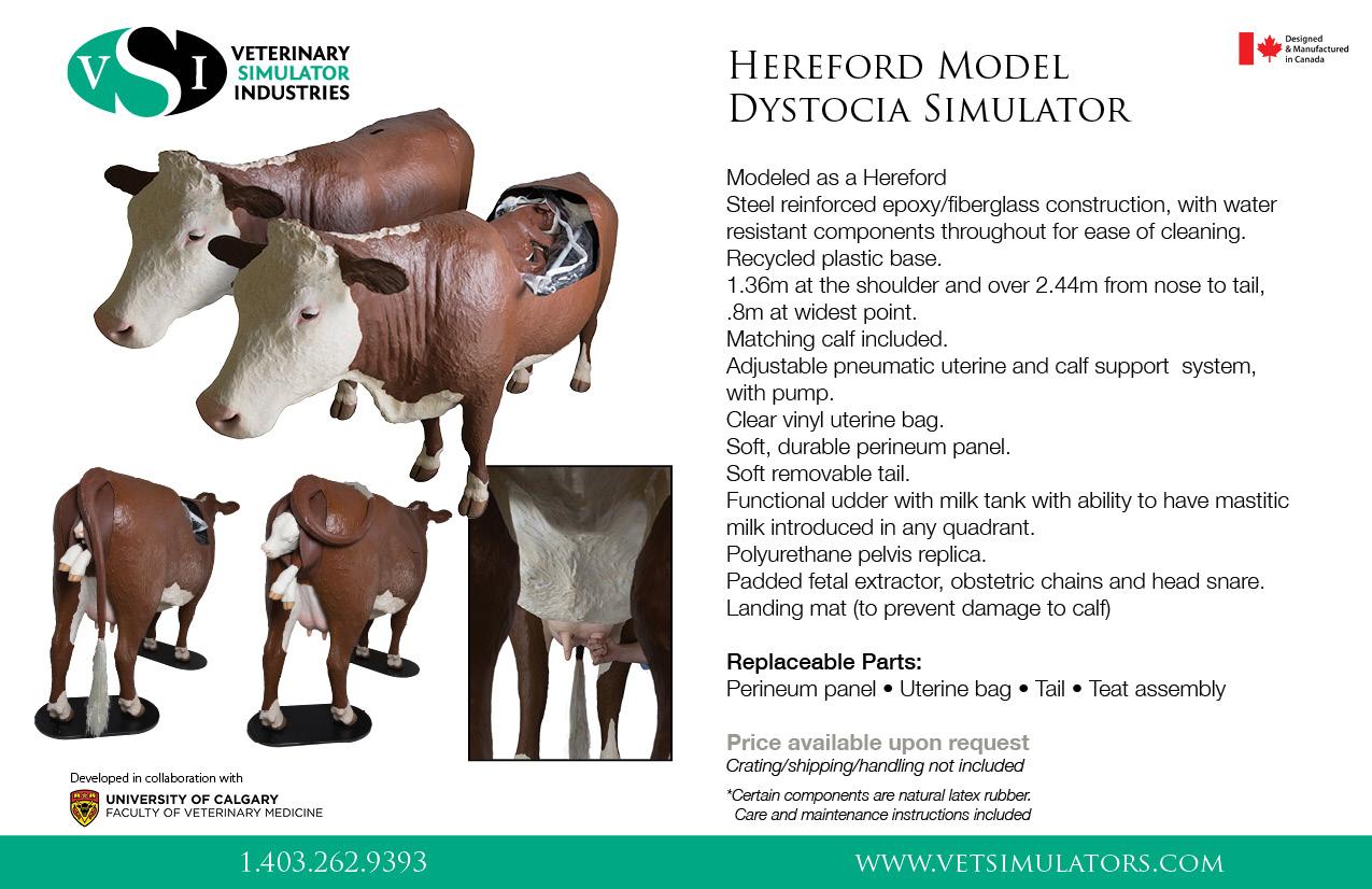 hereford birthing simulator
