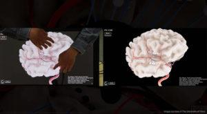 real time brain simulator