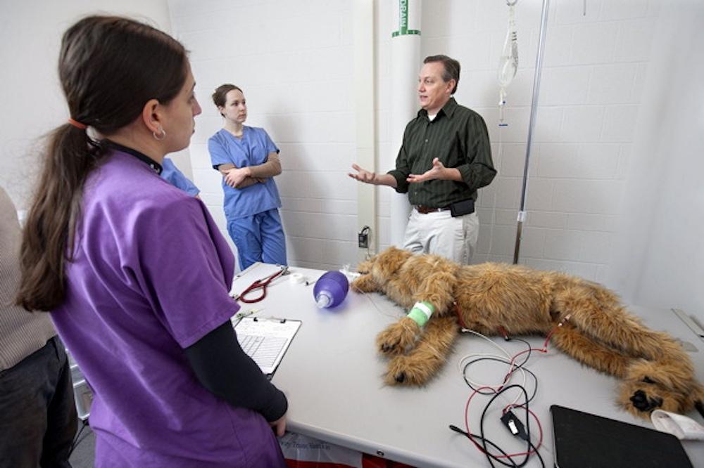 Cornell Simulated Pets