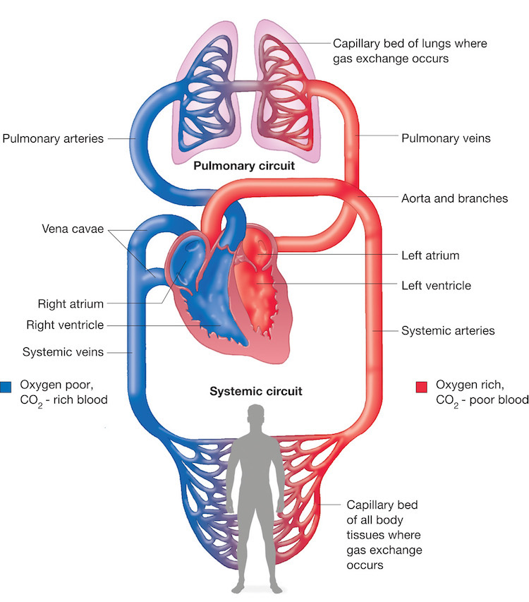 Physiology The Force Behind Healthcare Simulation A Guide For